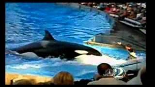 getlinkyoutube.com-Killer Whale Dies At SeaWorld