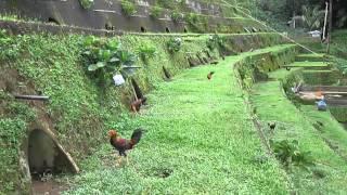 """getlinkyoutube.com-Eloterio E. Flores Game Farm"""" Entry Name: Inday Pia"""
