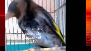 getlinkyoutube.com-حسون لغه الصديق لخليل حماده غزه 2015