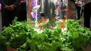 魚の排泄物を肥料にして野菜栽培もできるアクアリウム #DigInfo