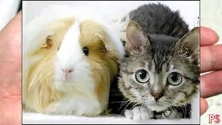 getlinkyoutube.com-Najmniejsze zwierzęta świata