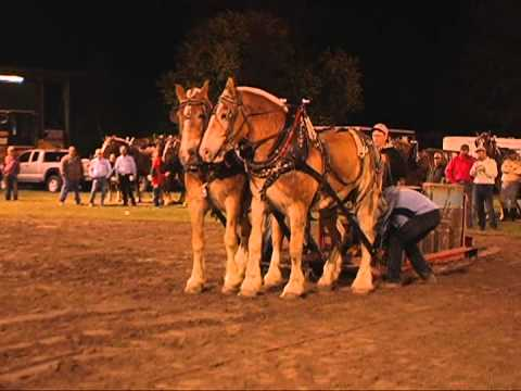 Draft Horse Pull Contest 2013