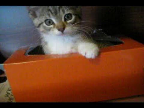 Cheezburger : Tissue Box Kitteh