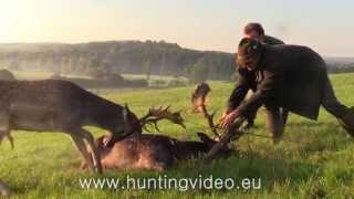 getlinkyoutube.com-Fallow Buck Rescue in Hungary (HD)