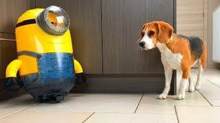 "getlinkyoutube.com-Funny Dogs VS ""HUGE R/C STUART"" The Minion! Part 3"