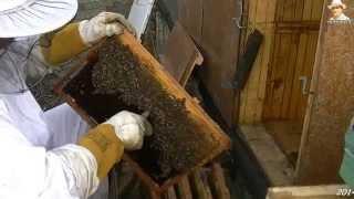 getlinkyoutube.com-Octombrie  lucrări de toamnă -apărătoriul de urginis contra viespilor-2014