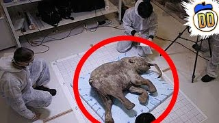 getlinkyoutube.com-15 Extinct Animals That May Still Be Alive