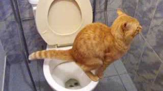 getlinkyoutube.com-Gato en el baño