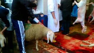 getlinkyoutube.com-مذبحة العيد بايطاليا