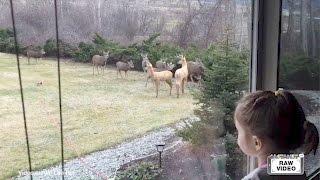 getlinkyoutube.com-Bambi in backyard