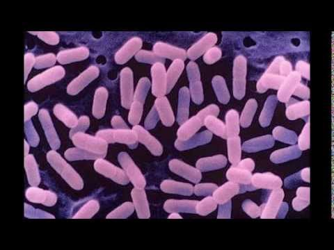 Listeria Video The Facts About Listeria