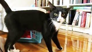 Katzen - Erste Schritte im neuen Heim - Was häufig vergessen wird