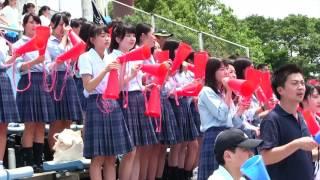 野球部の夏2016秦野曽屋高校