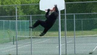 getlinkyoutube.com-BIGFOOT CAUGHT PLAYING BASKETBALL