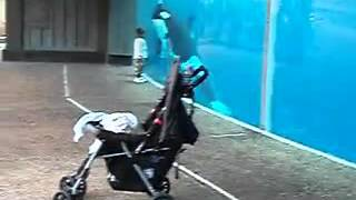 getlinkyoutube.com-A Killer Whale Plays Chase With A Toddler