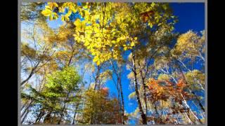 getlinkyoutube.com-写真の秘訣 広角レンズで紅葉を撮るポイント
