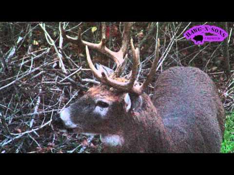 2014 Deer Hunting Killer HEAD Shots Biggest Whitetail Bucks Ever Filmed HawgTV