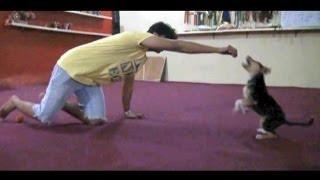 getlinkyoutube.com-Abdullah Minor كيف تشجع الكلب و تعليمه بدايات الهجوم و العض