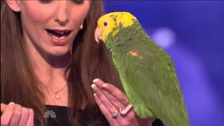 getlinkyoutube.com-Śpiewająca papuga w Mam Talent [NAPISY PL]