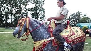 Location cheval mariage marocain 06 58 56 20 10