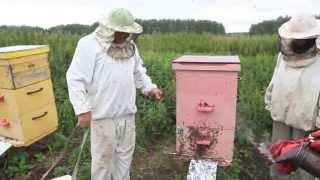 getlinkyoutube.com-Как правильно качать мед? Какие рамки выбрать для скачки меда?