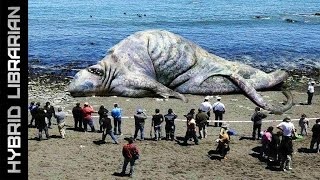 getlinkyoutube.com-The 10 Most Mysterious Sea Monster Carcasses Ever Found