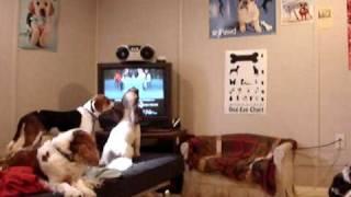 getlinkyoutube.com-Angel, the Singing Empire Carpet Dog! 0002
