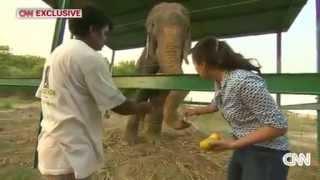 getlinkyoutube.com-虐待50年、解放されたゾウが「涙」流し話題に インド