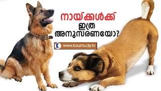 Sajan Cyriac's Dog Breeding & Training | Haritham Sundaram | Kaumudy TV width=
