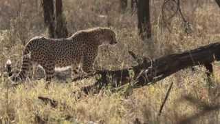 getlinkyoutube.com-African Safari Adventure in Tanzania - HD