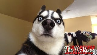 getlinkyoutube.com-Best Funny Dog Vines 2015 | PART 2