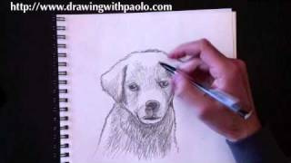 getlinkyoutube.com-Drawing a dog with Paolo Morrone