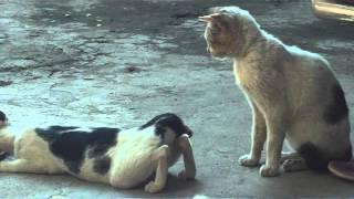 getlinkyoutube.com-Mandi Kucing (Cat Party).MOV