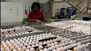 getlinkyoutube.com-Hyde County Egg Farm Rose Acre Update
