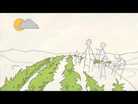 VIDEO: La Historia de Agricultura y la Economía Verde ~ ganadería méxico