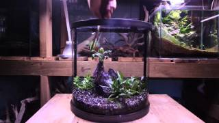 getlinkyoutube.com-Halfmoon aquarium setup / Montaje de acuario Mini moon