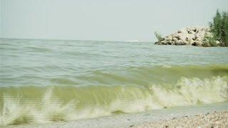 Local Scientist Discusses Causes, Solutions to Lake Erie Algae