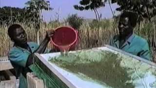 getlinkyoutube.com-Growing Spirulina Algae in a Village in West Africa
