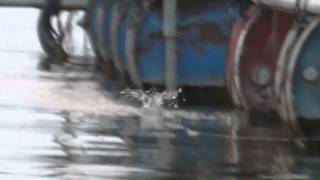 getlinkyoutube.com-ตกปลา ชะโดไดโนเสาร์