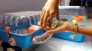 getlinkyoutube.com-How to tell if a hamster is male or female