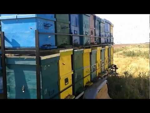 Platforma apicola ( Trailer hives )