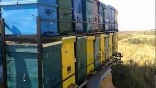 getlinkyoutube.com-Platforma apicola ( Trailer hives )