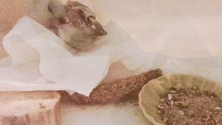 Avian Meds & Recovery Food for Parrotlet Smokey