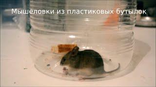 getlinkyoutube.com-Мышеловки из пластиковых бутылок. Mouse Trap from PET. ペットボトルからのネズミ捕り。