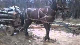 getlinkyoutube.com-calul lui nicusor movilita proba adevarata 1