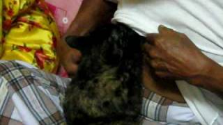 getlinkyoutube.com-kucing menetek