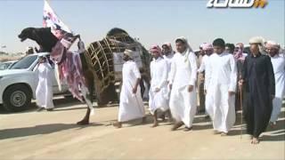 getlinkyoutube.com-#جديد_الساحة   مسيرة فردية مهيوبة الجزيرة (أم المعارك) للمالك علي بن راشد آل عليان العذبه المري