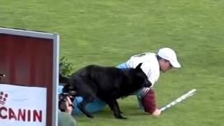 getlinkyoutube.com-مسابقة الكلاب كلب جيرمن او بلاك جاك  berger allemand  روعة