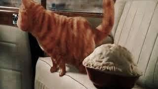 Funny Tamil Cat WhatsApp status - Garfield movie