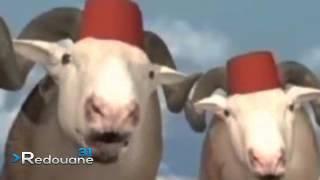 getlinkyoutube.com-ألحان و كباش انتي باغيا كبش سمين -  انتي باغيا واحد